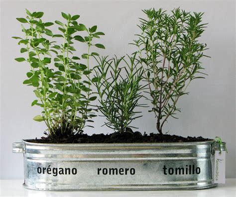 SPAZIO NOI: PRIMAVERA con plantas aromáticas