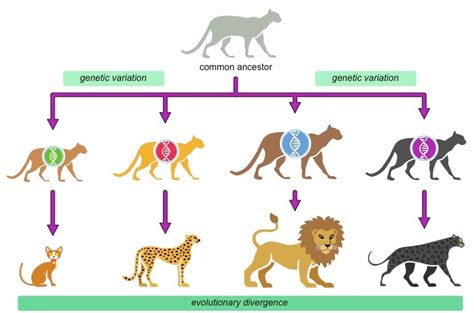 Speciation | BioNinja