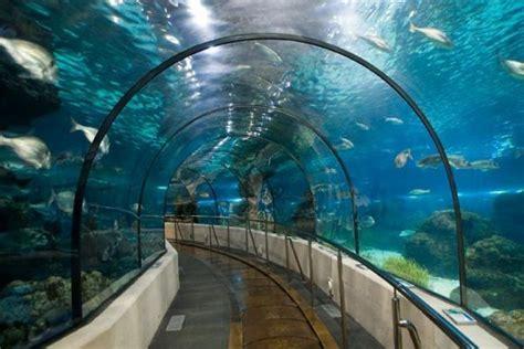 ᐅᐅ Aquarium de Barcelona 【Horarios, precios y descuentos 2018】