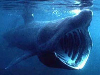 全長6公尺大嘴可吞人! 台東捕獲罕見巨口鯊   ETtoday 旅遊雲   ETtoday旅遊新聞 地方