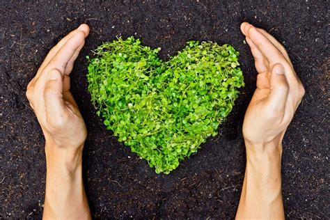 اعلان للحفاظ علي الاتزان البيئي   كلام نيوز