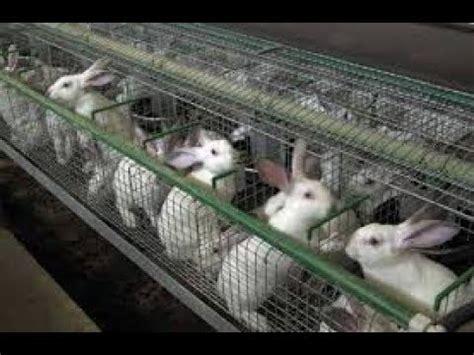 طريقه عمل مزرعه ارانب في المنزل بأقل التكاليف   YouTube