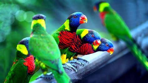 চমৎকার ১০টি পাখি   Top 10 Most Colorful Birds Part 1 ...