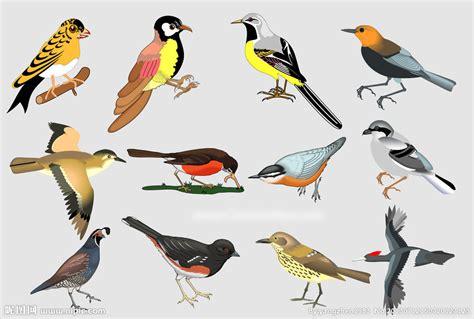 美丽的小鸟矢量图__野生动物_生物世界_矢量图库_昵图网nipic.com