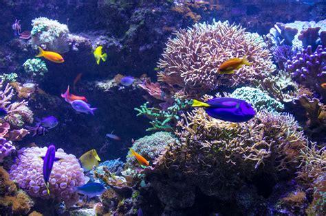วอลเปเปอร์ : ใต้น้ำ, แนวประการัง, พิพิธภัณฑ์สัตว์น้ำ, malm ...