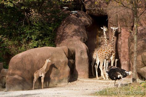 St. Louis Zoo, MO   Hauns Go West