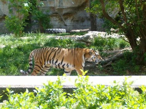 St. Louis Zoo  Saint Louis    All You Need to Know BEFORE ...