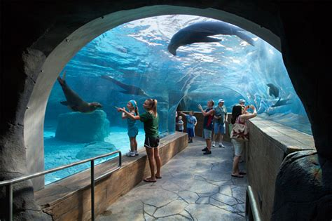 "St. Louis Zoo's ""Sea Lion Sound"" | Designing Zoos"