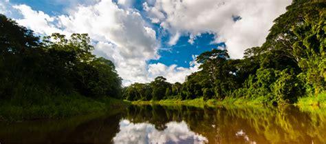 Stand for Trees   Proyecto de protección de la selva amazónica