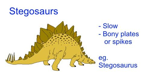Stegosaurs   Different kinds of dinosaurs