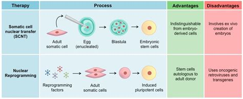 Stem Cell Therapy | BioNinja