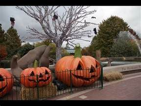 STL LIVE St Louis Zoo Boo at the Zoo Nights 2 of 2   YouTube