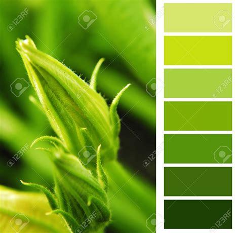 Stock Photo  con imágenes  | Esquemas de color verde ...