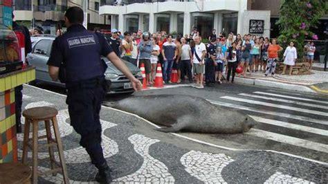 STOP AL MALTRATO ANIMAL: Video: León marino cruza la calle ...