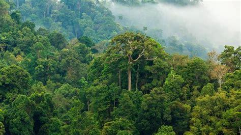Stop the destruction of 47,000 km² of Amazon rainforest ...