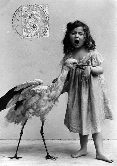 Strange and Unusual Vintage Animal Photographs ~ Vintage ...