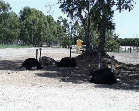 Sträuße Safaripark Vergel   Spanien Bilder