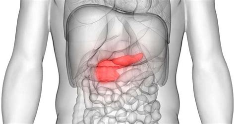 Study investigates potential new treatments for pancreatic ...