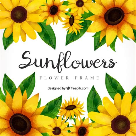 Sunflower Vectors, Photos and PSD files | Free Download