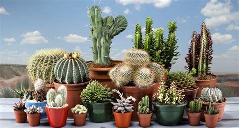 Sustrato Premium Específico Para Cactus Y Suculentas ...