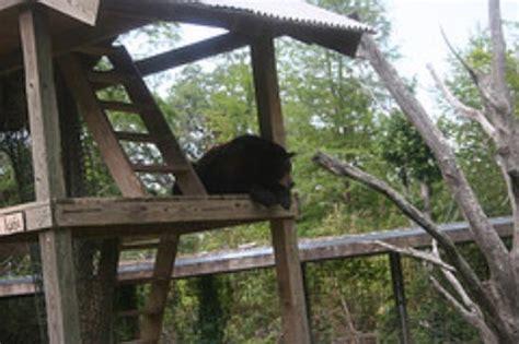 Swamp Exhibit at Audubon Zoo after Hurricane Katrina ...