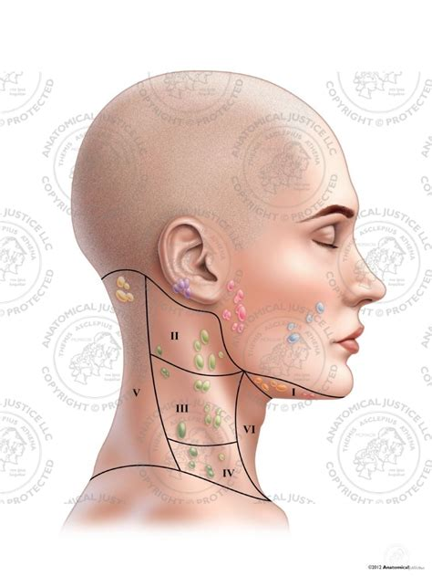 Swollen Lymph Node In Neck No Infection | carfare.me 2019 2020