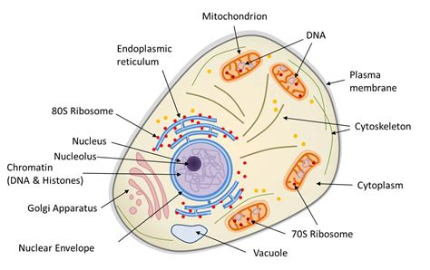 Symbiosis and evolution: at the origin of the eukaryotic ...