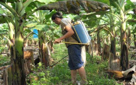 Syngenta s paraquat up for global review | Pesticide ...