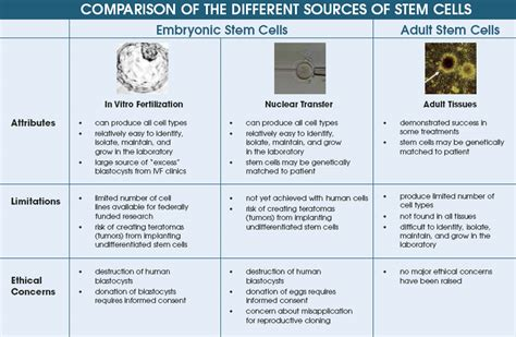 Synthetic Biology and Gene Synthesis: Types of Stem Cells