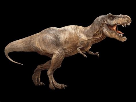 T rex 3D animated walk cycle   YouTube