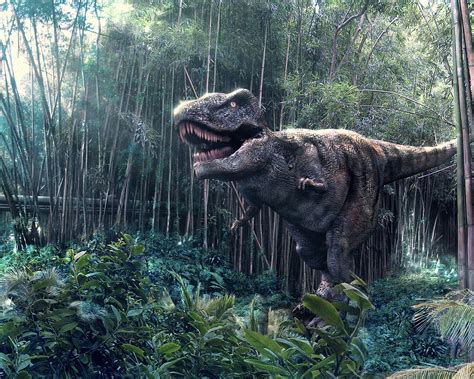 T Rex Wallpapers | Fun Animals Wiki, Videos, Pictures, Stories