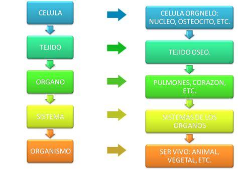 T.S.B: niveles de organizacion de los seres vivos
