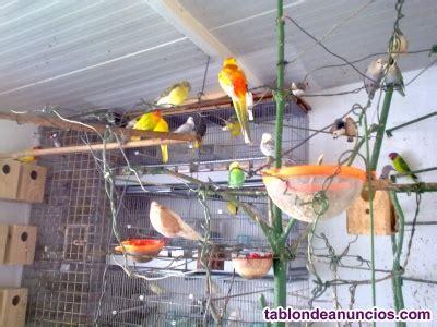 TABLÓN DE ANUNCIOS   Adoptamos pájaros y algunos animales.