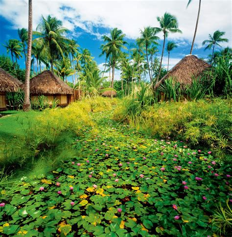 Tahití y Bora Bora | Muro vegetal, Polinesia francesa, Cabañas
