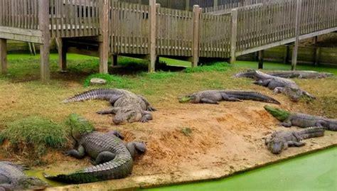 Take A Ride On The Longest Zipline In Louisiana At Gators ...