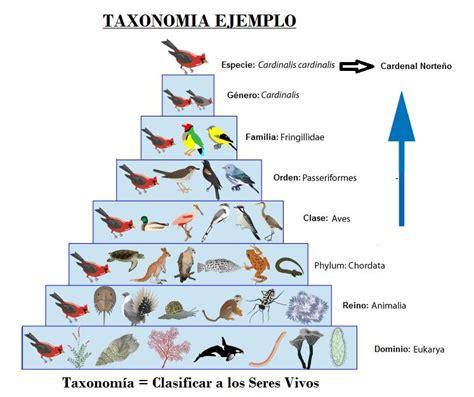 Taxonomia   Clasificacion de los Seres Vivos