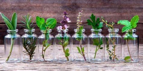 Te encantan las Hierbas Aromáticas? Acá tienes 10 de ellas ...