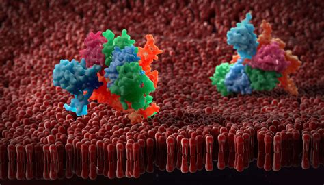 Tech Showcase: Improving Membrane Protein Expression ...