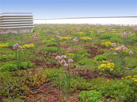 Techos verdes: Ahorro de energía, sostenibilidad y ...
