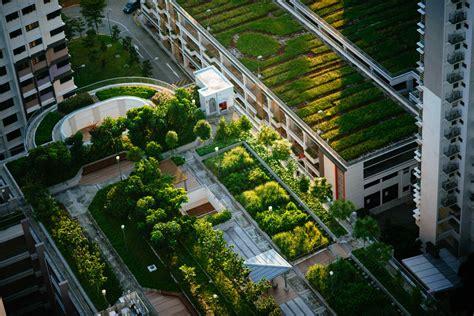 Techos verdes bajan la temperatura en clima tropical   LA ...
