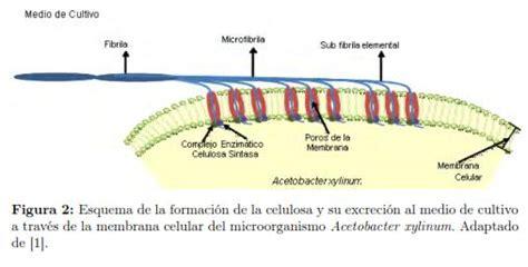 Técnicas de fermentación y aplicaciones de la celulosa ...