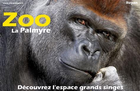 Teki Tizi: Zoo de La Palmyre