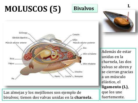 Tema09 invertebrados