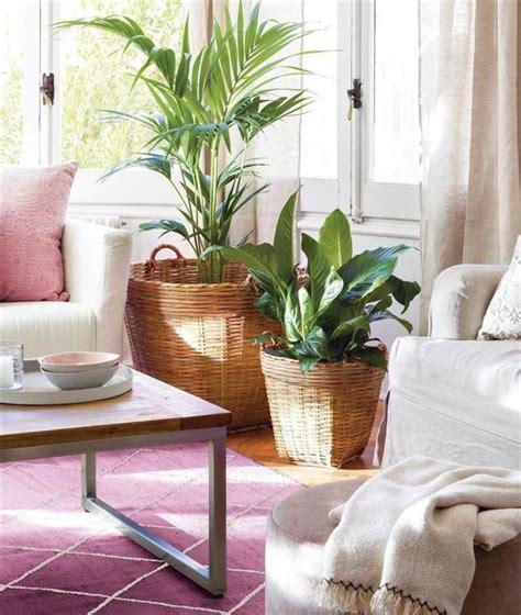 Tendencia: decorar tu salón con grandes plantas de ...