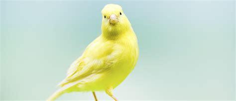 Tener un pájaro suelto en casa: trucos y precauciones – La ...