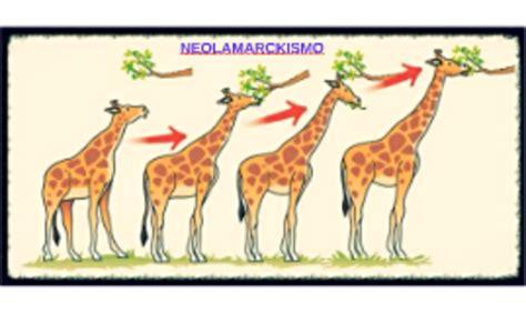 TEORÍA ACTUALES DE LA EVOLUCIÓN timeline   Timetoast timelines