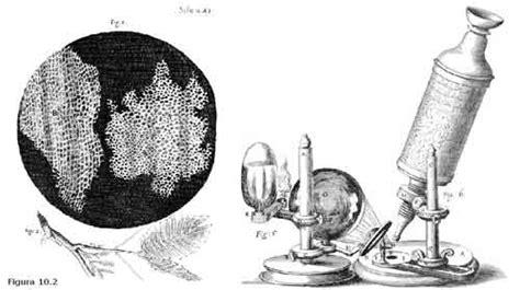 Teoria Celular   A descoberta das células   Planeta Biologia