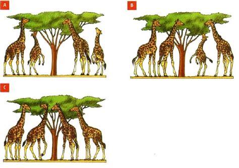 Teoría de Darwin » Blog de Biología