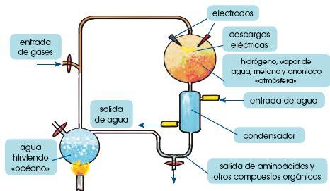 Teoría de la evolución química   Tu Tarea Gratis