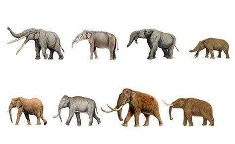 Teoría de la evolución según Darwin y Lamarck